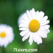 flower0 انواع مختلف گرد و خمیده کردن حاشیه ها در CSS 3