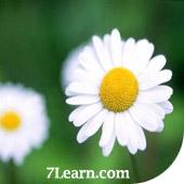 flower1 انواع مختلف گرد و خمیده کردن حاشیه ها در CSS 3
