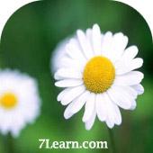 flower2 انواع مختلف گرد و خمیده کردن حاشیه ها در CSS 3