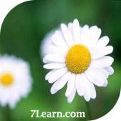 flower3 انواع مختلف گرد و خمیده کردن حاشیه ها در CSS 3