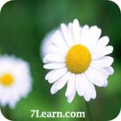 flower4 انواع مختلف گرد و خمیده کردن حاشیه ها در CSS 3
