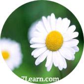 flower5 انواع مختلف گرد و خمیده کردن حاشیه ها در CSS 3